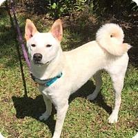 Adopt A Pet :: Jafar - Jacksonville, NC