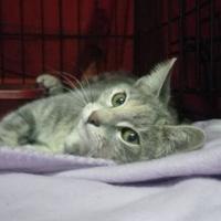 Adopt A Pet :: Rosie - Palm Harbor, FL