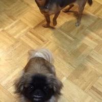 Adopt A Pet :: Angel - Irmo, SC