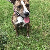 Terrier (Unknown Type, Medium) Mix Dog for adoption in Detroit, Michigan - Prairie