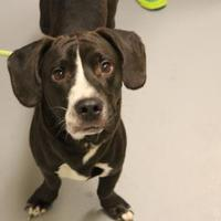 Adopt A Pet :: Conner - Philadelphia, PA