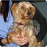 Adopt A Pet :: Rupert - Rigaud, QC