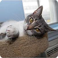 Adopt A Pet :: Mimi - New York, NY