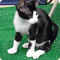 Adopt A Pet :: Frank - Naples, FL