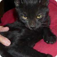 Adopt A Pet :: Krinkle - Dallas, TX