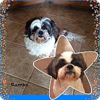 Adopt A Pet :: Rambo - San Antonio, TX