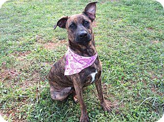 Labrador Retriever/Shepherd (Unknown Type) Mix Dog for adoption in Lexington, North Carolina - KERRI