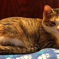 Adopt A Pet :: Kyra (aka Pickles) - Kingwood, TX