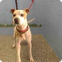 Adopt A Pet :: A502151 - San Bernardino, CA