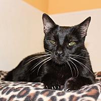 Adopt A Pet :: Solo - Boca Raton, FL