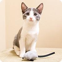 Adopt A Pet :: Yasmine - Chicago, IL