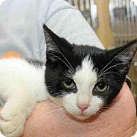 Adopt A Pet :: FLASH - Pittsburgh, PA