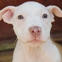 Adopt A Pet :: Leah (Fab five) - Wenonah, NJ