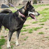 Adopt A Pet :: Shelby - Prague, OK