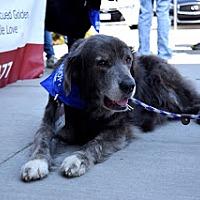 Adopt A Pet :: Garfunkel #0617 - Fort Worth, TX