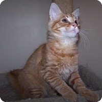 Adopt A Pet :: Gil - Colorado Springs, CO