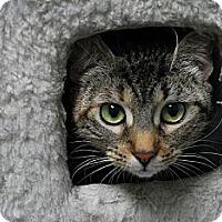 Adopt A Pet :: Avril - Lunenburg, MA