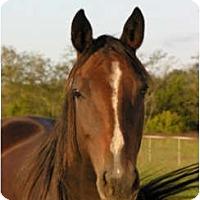 Adopt A Pet :: Mona - Lyles, TN