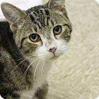 Adopt A Pet :: CJ - Medina, OH