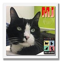 Domestic Shorthair Cat for adoption in Palm Desert, California - MJ