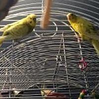 Adopt A Pet :: Jazz & Jess - Neenah, WI