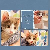 Adopt A Pet :: Fitzpatrick - Loma Linda, CA