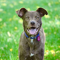 Adopt A Pet :: Snickers - Berkeley Heights, NJ