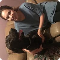 Labrador Retriever Dog for adoption in Dothan, Alabama - Jessie