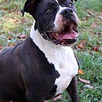 Adopt A Pet :: Lelani - Front Royal, VA