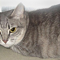 Adopt A Pet :: Misty - Wildomar, CA