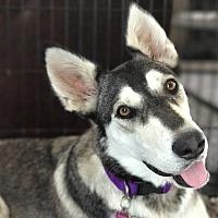 Adopt A Pet :: ADRIENNE (Courtesy List) - San Pedro, CA