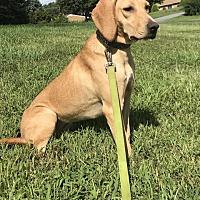 Adopt A Pet :: Waverly - Frederick, MD