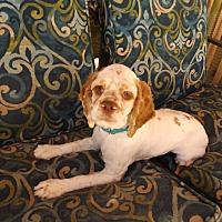 Adopt A Pet :: Noah - Kannapolis, NC