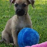 Adopt A Pet :: Kurt - La Habra Heights, CA