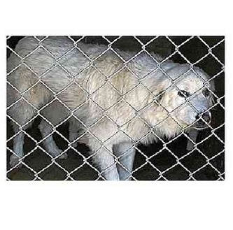 Great Pyrenees Mix Dog for adoption in Kyle, Texas - Ariel