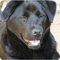 Adopt A Pet :: Flathead - E Windsor, CT