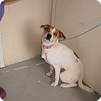 Adopt A Pet :: Bella - Wallaceburg, ON