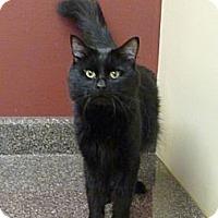 Adopt A Pet :: Eduardo - Chicago, IL