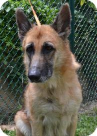 German Shepherd Dog Mix Dog for adoption in Miami, Florida - Firefly