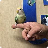 Adopt A Pet :: Luna & Comet - Woodbridge, NJ