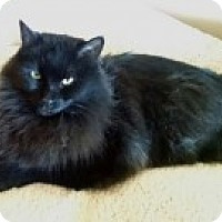 Adopt A Pet :: Trevor - McHenry, IL