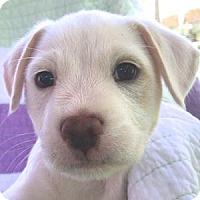 Adopt A Pet :: Luke - La Costa, CA