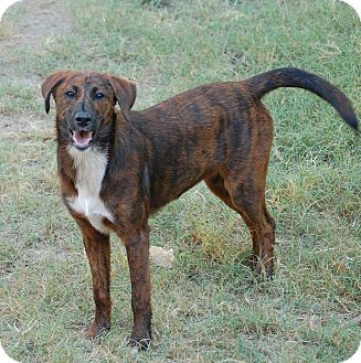 Cattle Dog Mix Dog for adoption in Fordyce, Arkansas - Gizzy