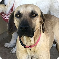 Adopt A Pet :: Egypt - Austin, TX