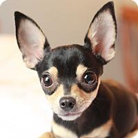 Adopt A Pet :: *ADOPTION PENDING* Morgan - Romeoville, IL