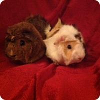 Adopt A Pet :: Princess and Angel - Williston, FL