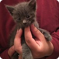 Adopt A Pet :: Logan - Dalton, GA