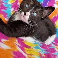 Adopt A Pet :: Daisy - Hornell, NY