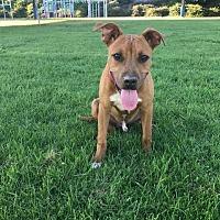Adopt A Pet :: Ceasar - Alta Loma, CA
