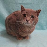 Adopt A Pet :: Finley - Redwood Falls, MN